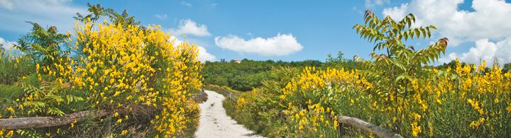 Naturpark der Euganeischen Hügel