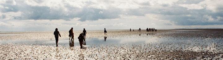 Balade guidée dans la mer des Wadden