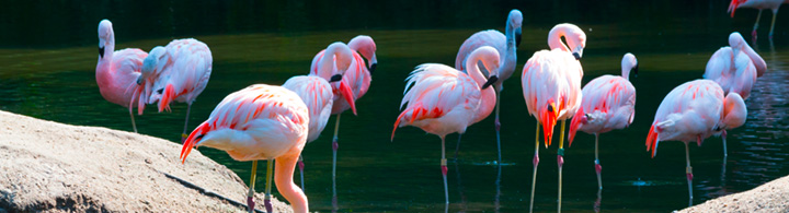 Pretty Woman – pretty Flamingo
