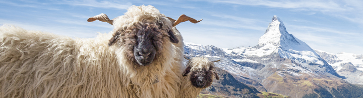 Zermatt – La montagne à 360°