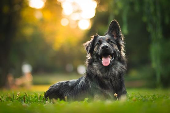Les chiens sont-ils autorisés<br>à Europa-Park?