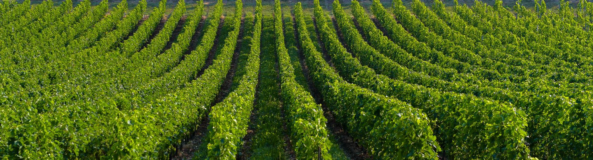 Kurztrip nach Bordeaux und Saint-Emilion– Wein und Welterbe